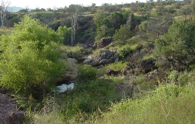 Biota of AWRR